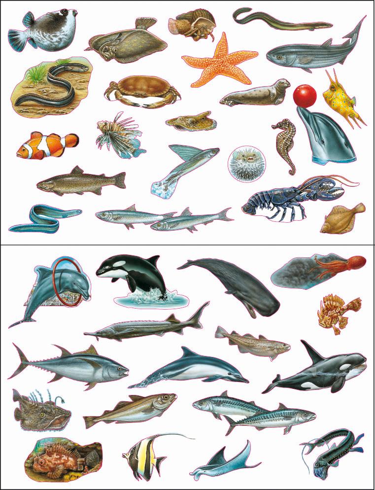 Graphique de poissons de ligne de fond