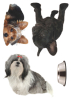 Stickers Chiens Clairefontaine Home Déco