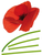 Sticker Mural Coquelicots Clairefontaine