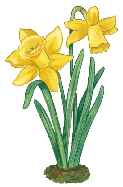 Gommettes fleurs maildor mille et une feuilles - Dessins fleur ...