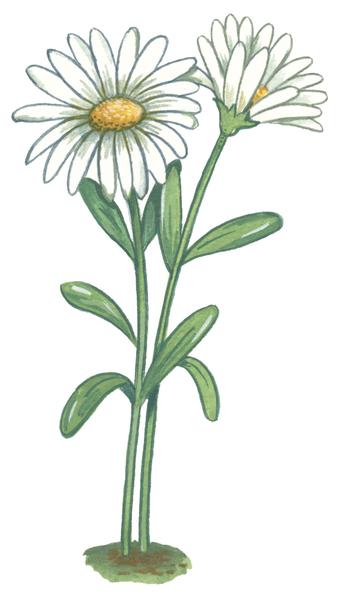Gommettes fleurs maildor mille et une feuilles - Dessin de fleur en couleur ...